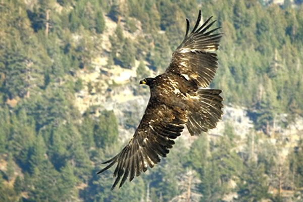 LTWC returns bald eagle to wild