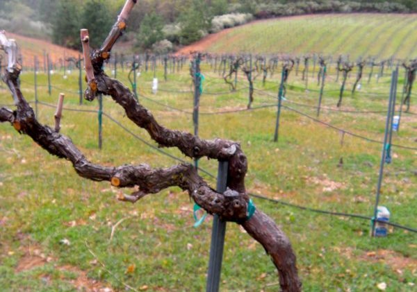 Foothill wineries working hard to keep frost from vines
