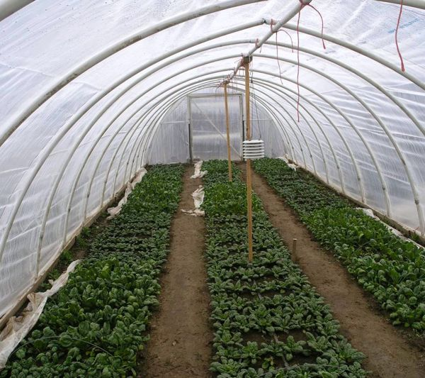 Workshop About How To Build A Hoop House