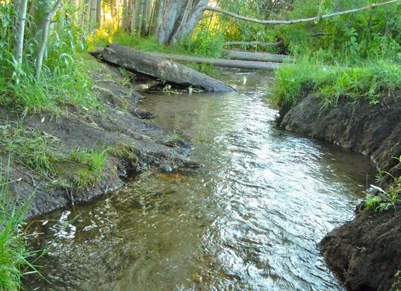 USFS gears up to restore Burke Creek