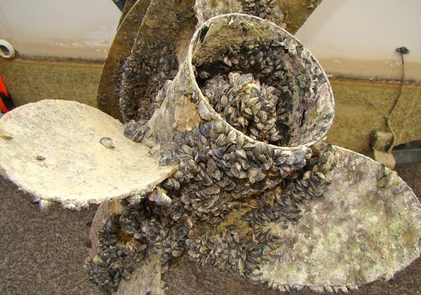 Invasive species a constant threat in the West