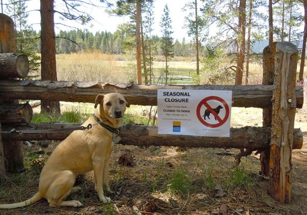 Dogs off-limits from South Tahoe marsh