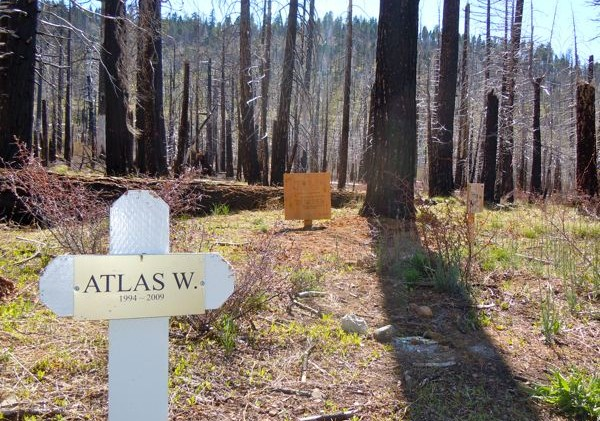 Pets continue to have final resting spot in forest