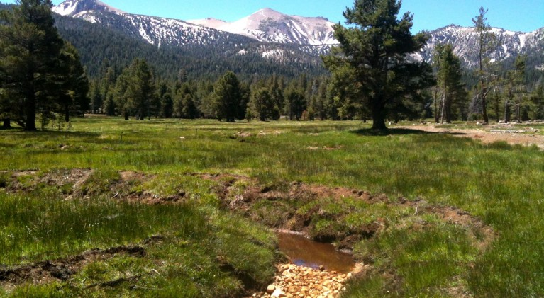 Project analyzing if meadows reduce carbon dioxide
