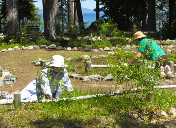 South tahoe gardeners celebrate 50 years of playing in Garden club program ideas