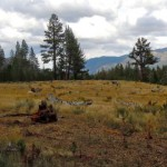 Washoe Meadows State Park on the South Shore. Photo/LTN file