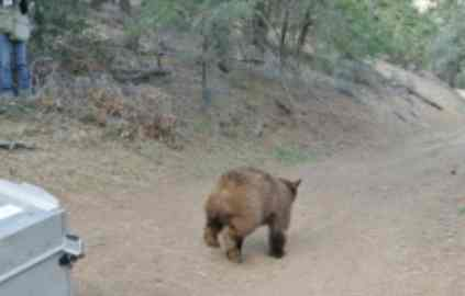 Bear-trapping interference case appealed
