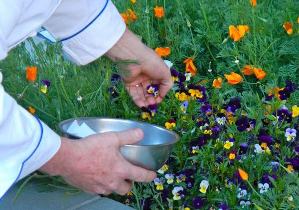 Edible garden tour in Truckee