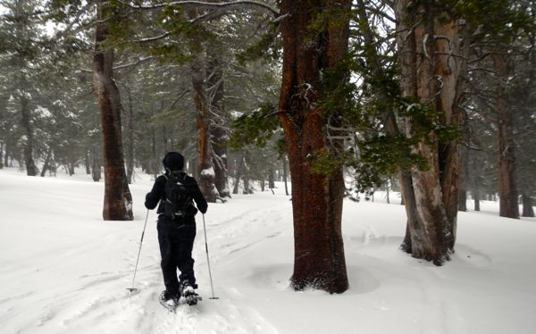 Winter returns for Carson Pass snowshoe