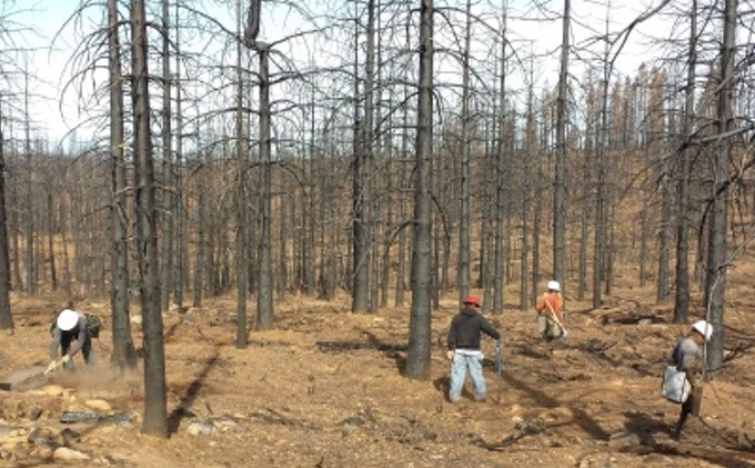 King Fire burn area being reforested