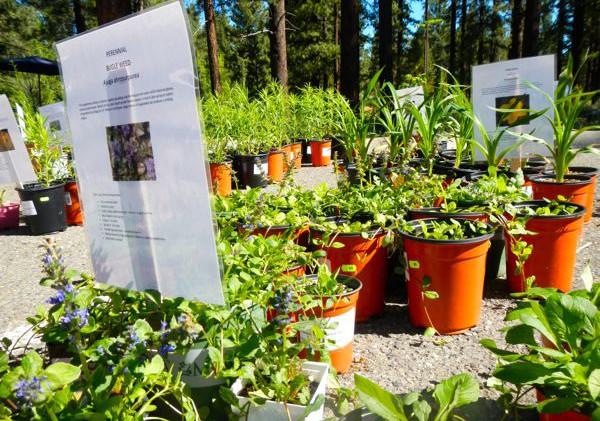 Truckee Demonstration Garden activities in the works