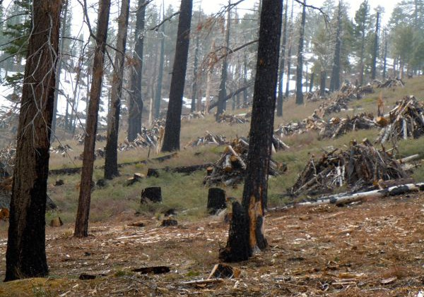 Partnership to test if forest thinning can grow groundwater