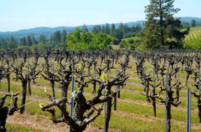 Big winners among NorCal wines