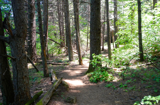 Law requires USFS to increase use of volunteers