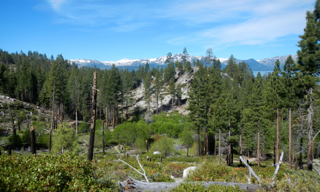 Feds: Drought kills 66 million trees in Sierra