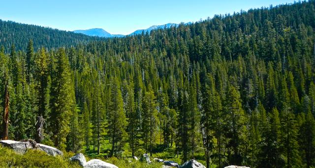Lichen study needs volunteers