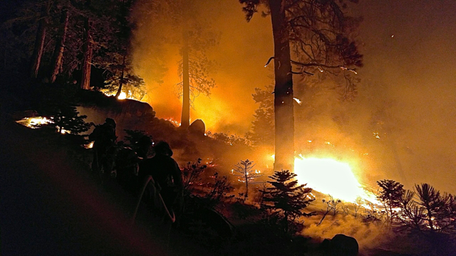 Wildfire season could be bad with healthy vegetation
