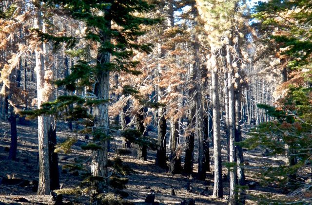 Feds give Tahoe $6.8 million to thin forests