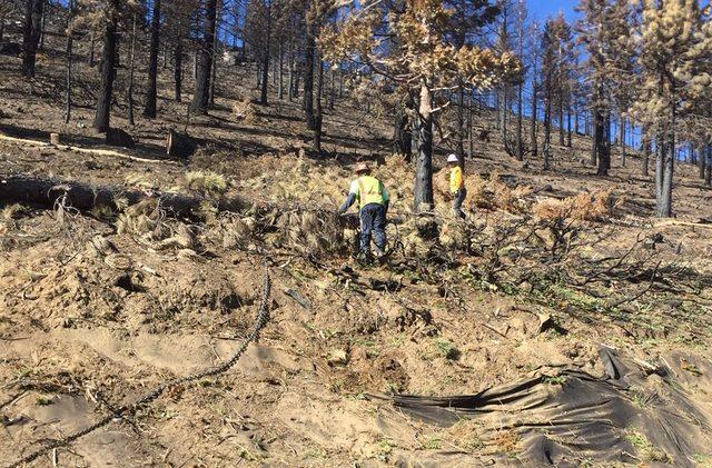 USFS ready to restore Emerald Fire scar