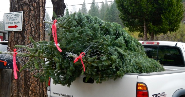 Keep Christmas merry by properly securing tree to vehicle