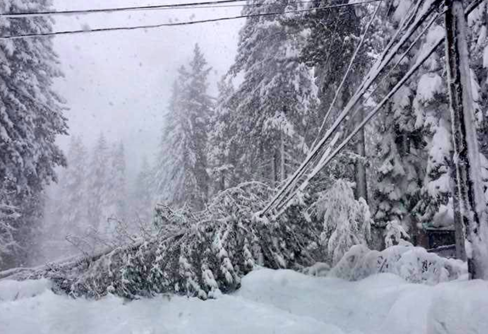 Downed power lines in Incline Village because of toppled trees. Photo/Washoe County
