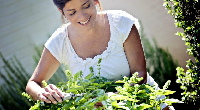 Possible to have garden-fresh herbs all year