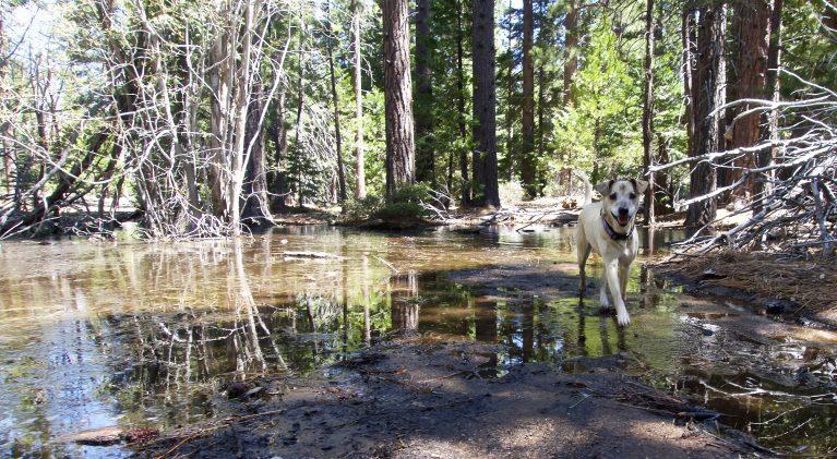 Rapid snowmelt causes floods, impacts recreation
