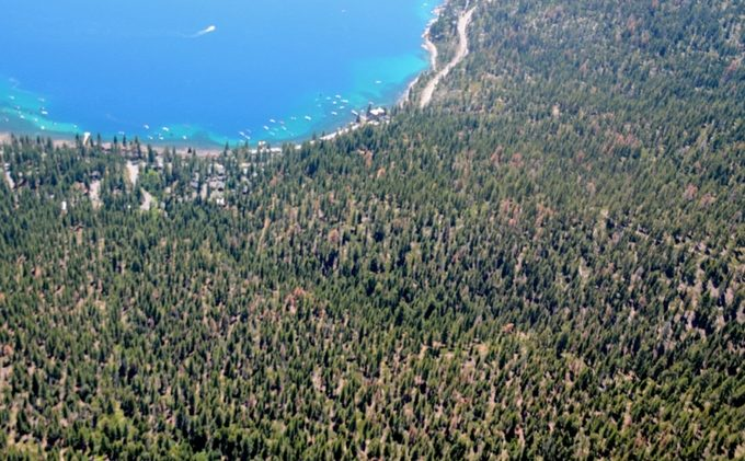 With climate change, tree die-offs may spread