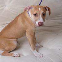 Tahoe Tails — Adoptable Pets in South Lake Tahoe