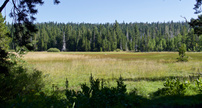Page Meadow — a tranquil, scenic trek