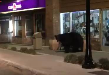Placer deputy keeps eye on furry would-be burglar