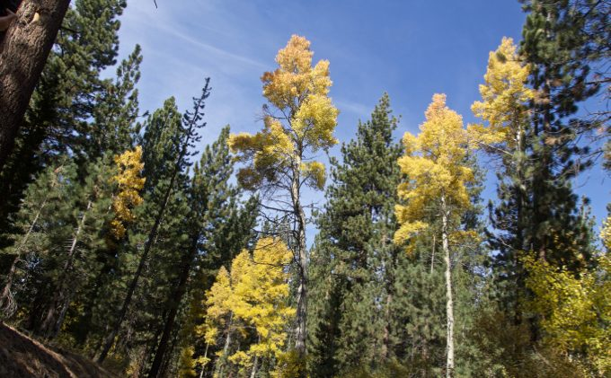 Beauty of fall lingering throughout Tahoe area