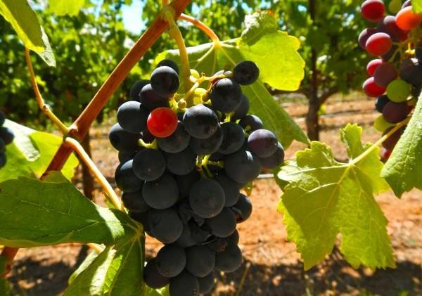 California winemakers have eye on China's tariffs