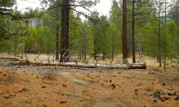 The clearing in the distance could be an area for a stage. Photos/Kathryn Reed