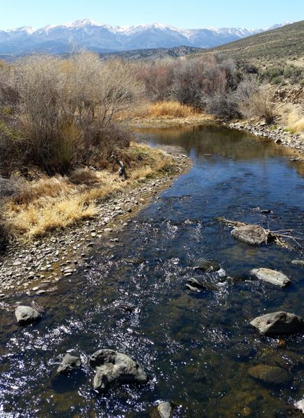 The Walker River that farmers in Mason and Smith valleys rely on. Photo/Anne Knowles