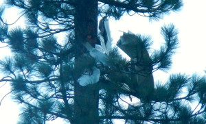Pieces of the plane are lodged in a tree.