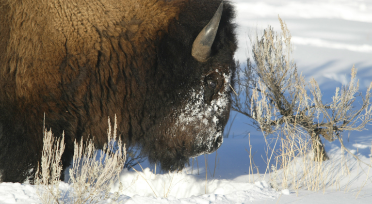 Winter casts magical spell on national parks