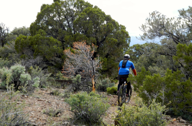 Mountain bike group fights for wilderness access