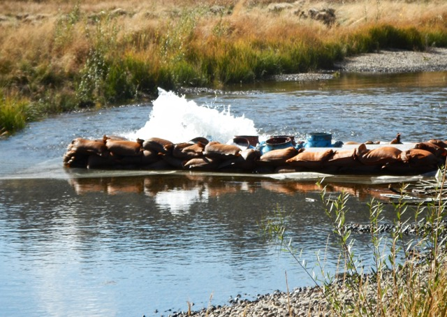 Water is being pumped into the new channel. Photo/Kathryn Reed