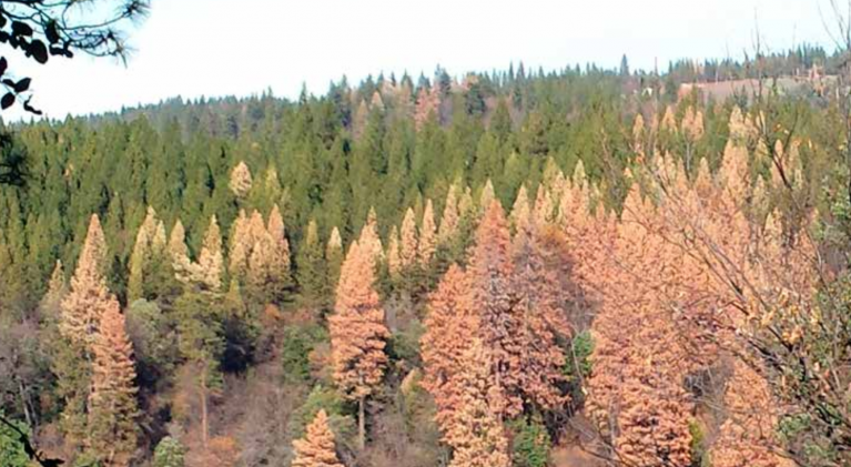 Workshop in El Dorado County about reforestation