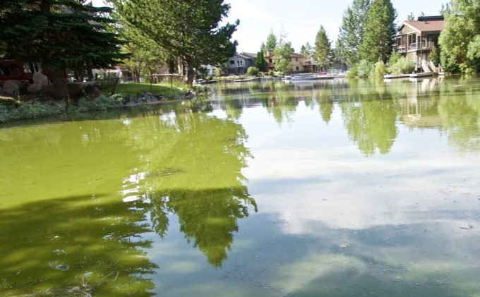 Hot weather, land abuses fueling algal blooms