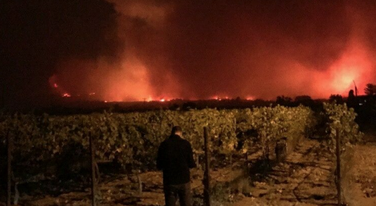 Hope as vintners assess long-term impact of fires