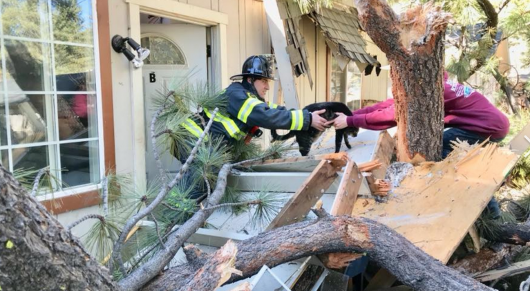 Tree into South Lake home; no injuries
